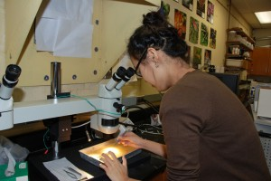 Jae Sim dissects a leech in preparation of electrophysiology study