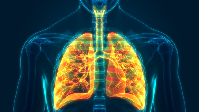 Illustration of a body with the lungs visible in bright colors
