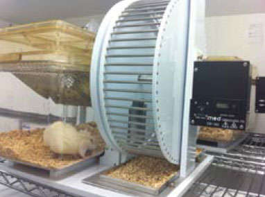 Photo shows a white rat in a glass cage with access to a running wheel that is attached to a monitoring computer