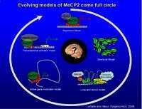 Evolving models of MeCP2