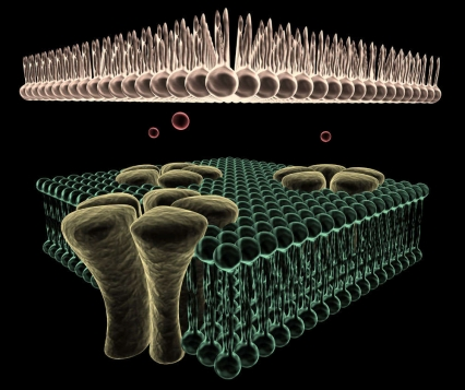 3D rendering of Ion channels on the membrane of a Cell.