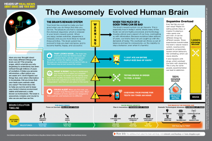 The Awesomely Evolved Human Brain